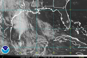 Bill in the Gulf of Mexico